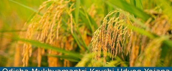 [Registration] Odisha Mukhyamantri Krushi Udyog Yojana 2021