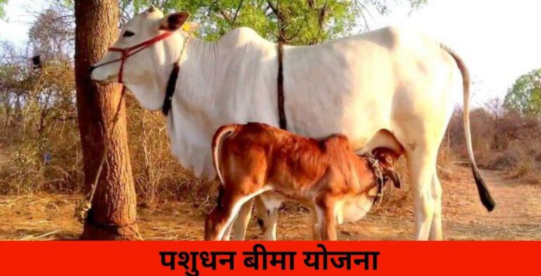 Haryana Pashudhan Bima Yojana 2021